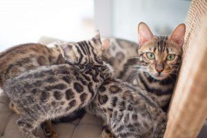 Sweetheart_und_Kitten_01